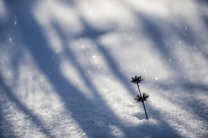 Winterzauber,