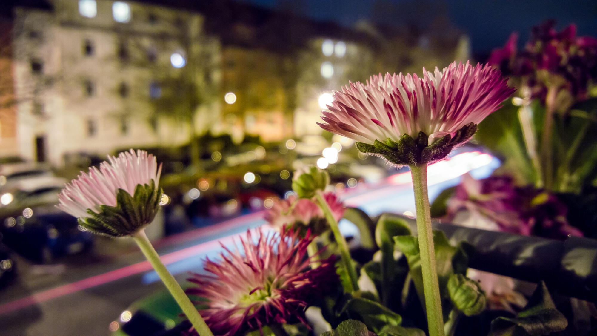 Balkonblumen Nachts mit Cartrails