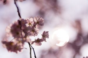 Frühlingsblüuen