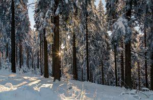 Winterwald mit untergehender Sonne