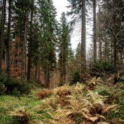 die vielen Farben des Waldes