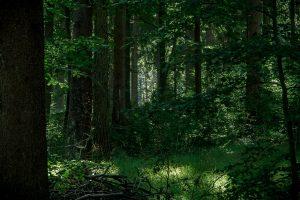 Lichtspiel im Wald