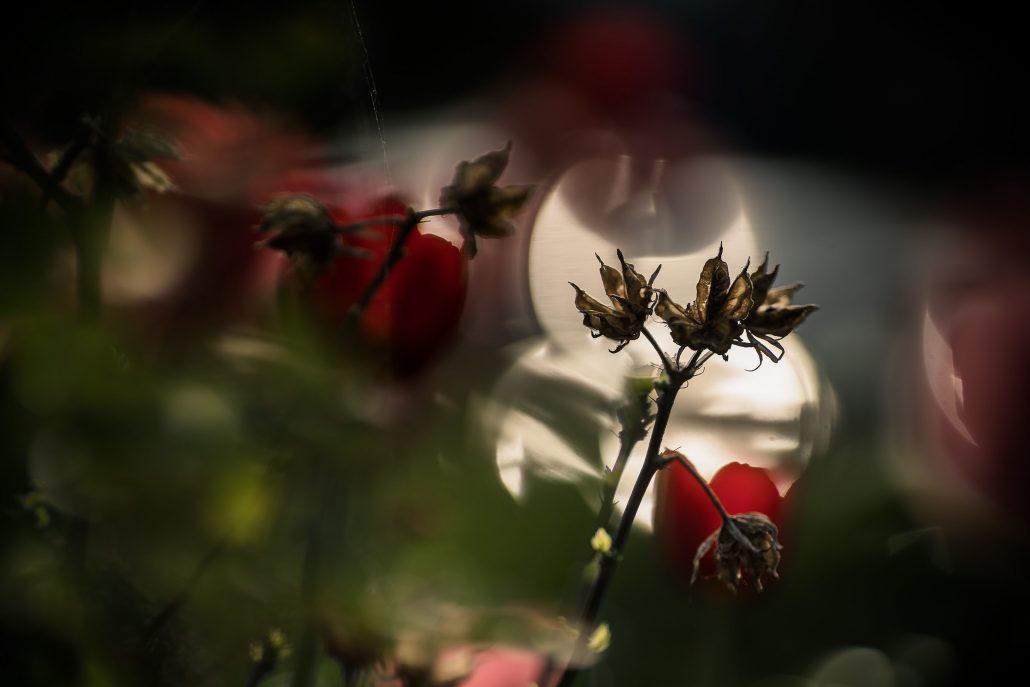 Sonnen Reflektionen hinter einer Pflanze