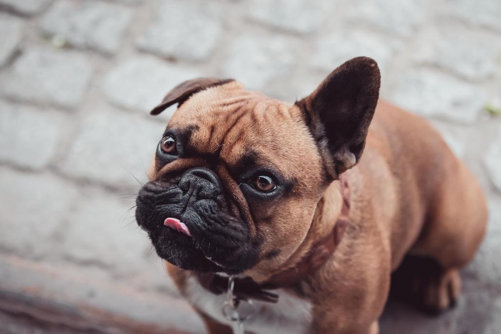 Hundefotografie in Thüringen