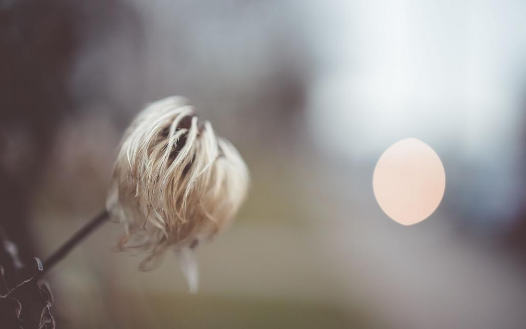 am Wegesrand, fotografiert mit der Canon EOS R & dem RF 35mm 1.8 Makro
