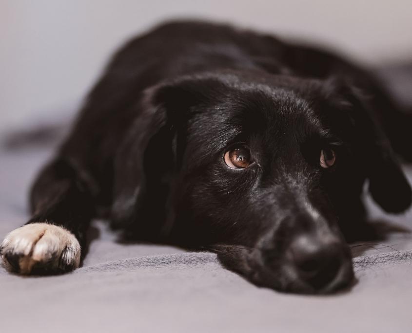 Hund fotografiert mit Tier Augenerkennung der Sony A7rIII