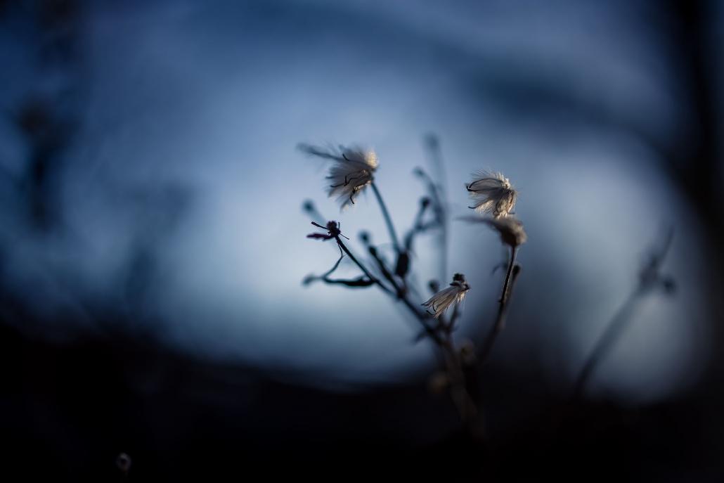 bei tief stehender Sonne gegen den blauen Himmel fotografiert Canon EOS R | RF 35mm