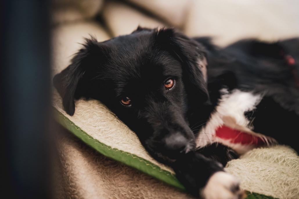 Hundefotografie als Homestory in gewohnter Umgebung in Erfurt und Thüringen