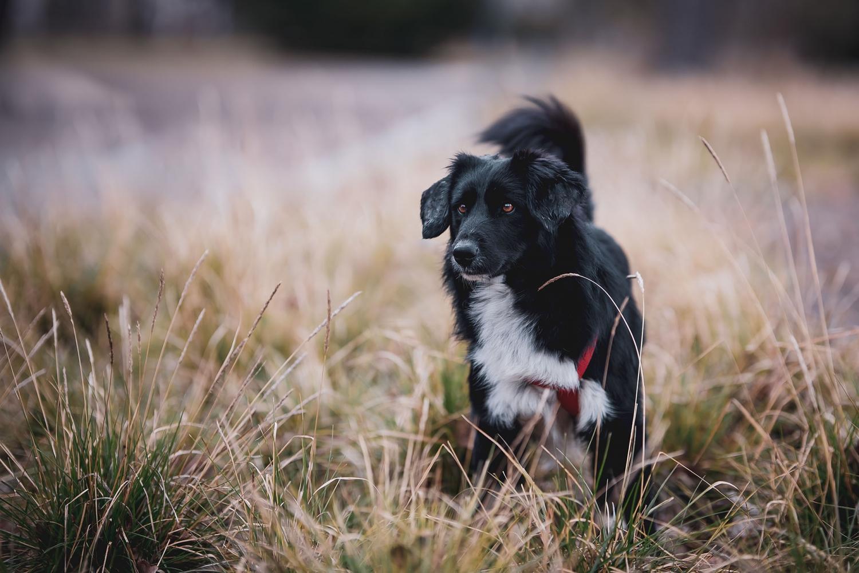 Outdoor Hundeportrait fotografiert im Erfurter Stadtpark Canon EOS R Sigma 105mm