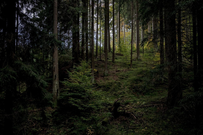 im Wald nahe Meyersgrund
