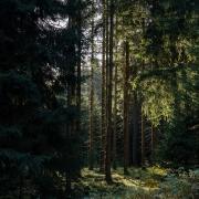 der Thüringer Wald am Bahnhof Rennsteig