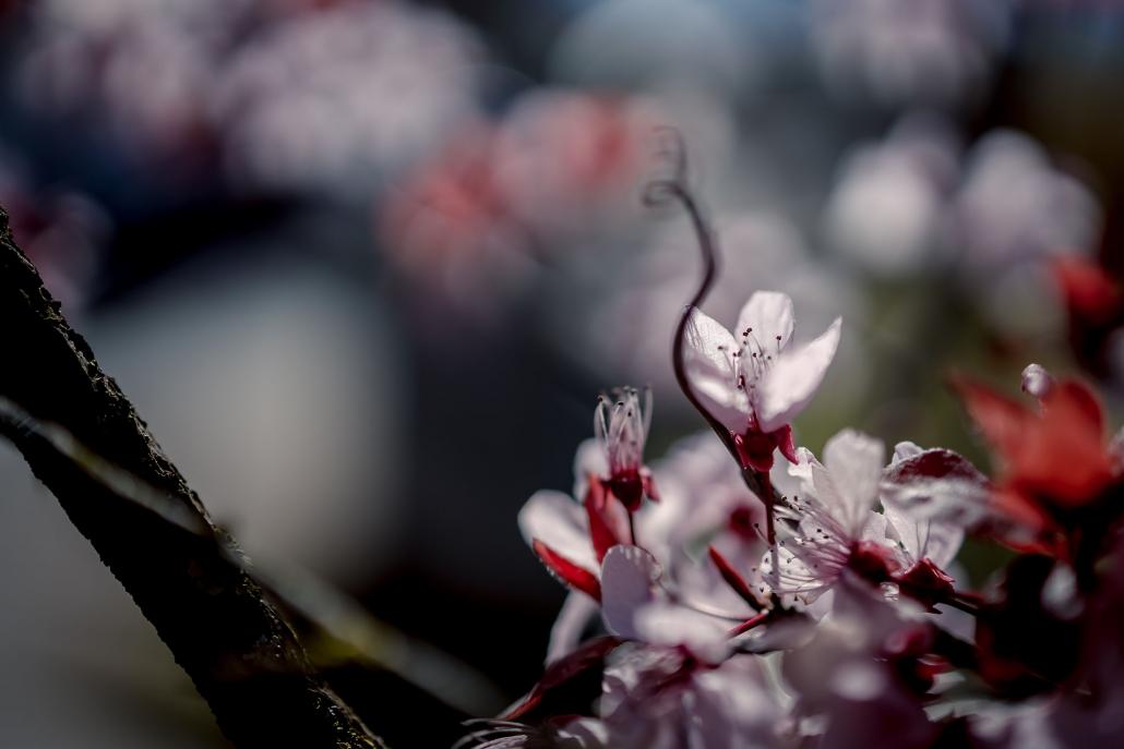 Frühlingsblüher gegen die Sonne fotografiert