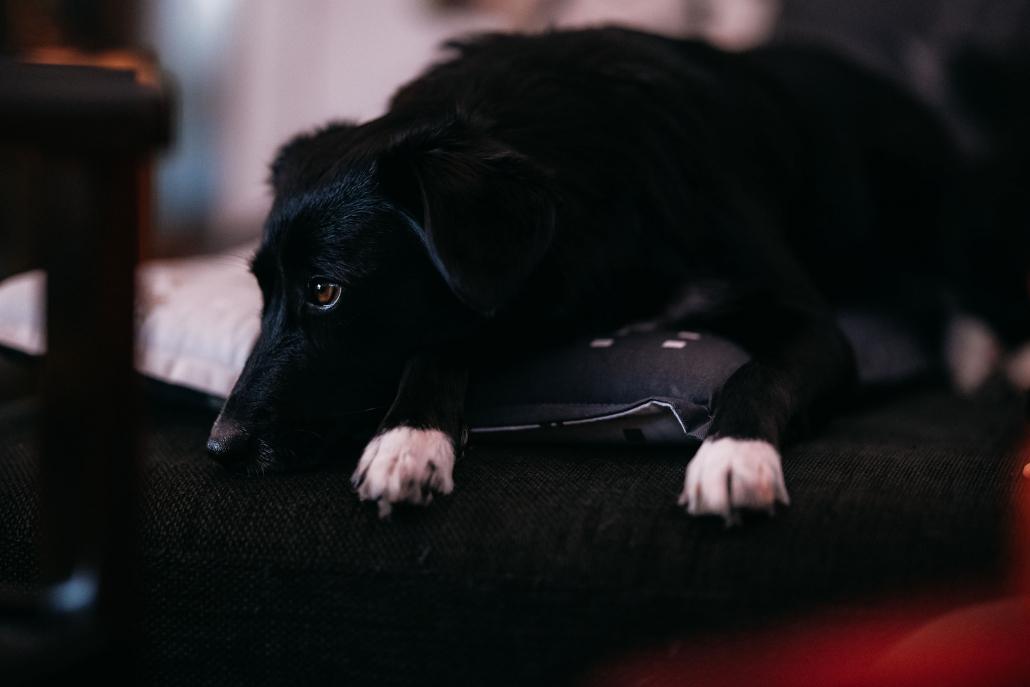 selbst auf der heimischen Couch lassen sich bei gemütlicher Beleuchtung noch tolle Tierportraits fotografieren. Canon EOS R6 & Canon RF85mm Blende 1.2 bei ISO 6400