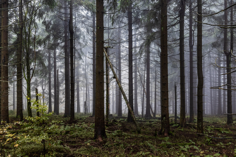 mystischer Thüringer Wald beim Adlersberg Canon EOSR6 & EF 35mm f/1.4l ii usm