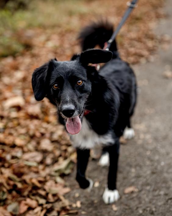 offenblendig und in doppelter Bewegung fotografiertes Hundeportrait Canon EOSR6 & EF 35mm f/1.4l ii usm