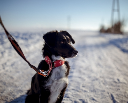 schwarzer Hund im Schnee, toller Kontrast im 35mm Look bei Blende 1.4 Canon EOSR6 & EF 35mm f/1.4l ii usm